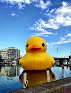 Who are you staring at, Rubber Duck?